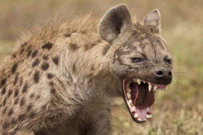 Emanuela Negoescu,  judecătoare, escroacă naţională, a distrus victima şi a stat încordată precum hiena