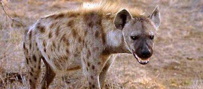 Rareş, şef serviciu declaraţii contribuabili, fictiv în funcţie, acţionează ca o hienă la bugetul de stat şi împotriva cetăţenilor